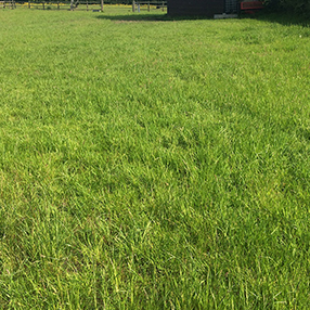 "Harrow ""After"" 6th June Harrowed and Fertilised"