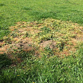 Example of DIY Weed Control That Killed the Grass Too!